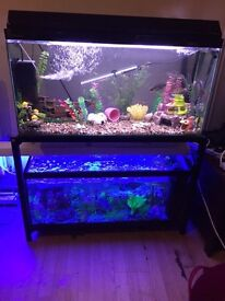 Double 3ft tank and stand (full setups or bare) offers or swaps
