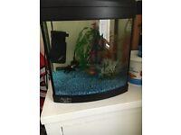 Fish tank, fish & accesories