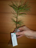 TREE SEEDLINGS for Wedding Gifts & EVENTS