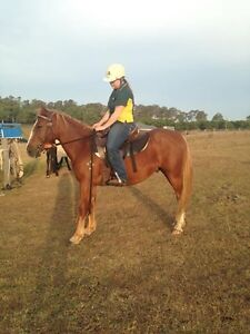 6y/o papered  kosciuszko Bolwarra Heights Maitland Area Preview