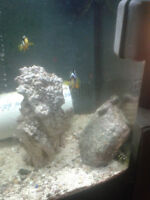biocube 14 gallon fish tank saltwater