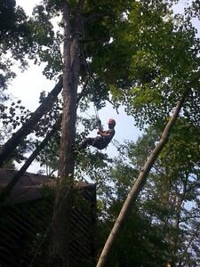 Affordable Tree Trimming and Removal London Ontario image 5
