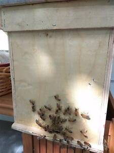 5 Frame Nuc honey bee hives Eastwood Ryde Area Preview