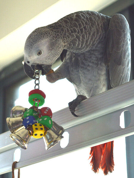 Make Your Own Bird Toys : How to make your own bird toys ebay