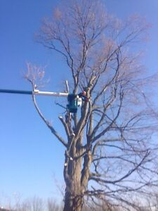 Affordable Tree Removal  Cambridge Kitchener Area image 2