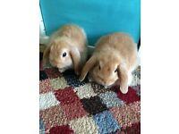 Two girls rabbits