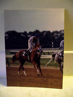 Secretariat getting ready for the Belmont Stakes 1973