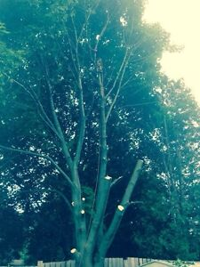 Affordable Tree Removal  Cambridge Kitchener Area image 4