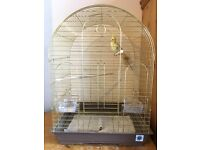 Cockatiel parrot and cage *cheap*