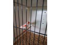 Mosaic canarys