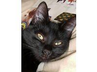 Urgent home needed for loving family cat!!!
