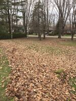 Full Yard and Leaf Cleanups - LAWN and ORDER (seniors 10% off)