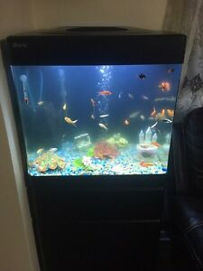 38gal Red sea max fish tank Edmonton Edmonton Area image 1