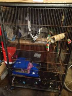 ferret kingdom cage Bondi Junction Eastern Suburbs Preview