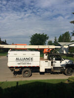 Tree Service & Stump Grinding/Removal