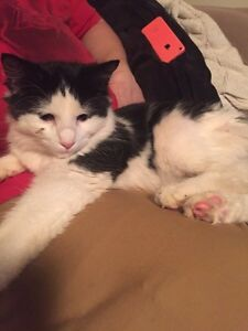 FOUND! Black and white kitten in the southlands area