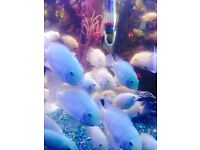 Tropical Fishes for Sale