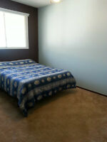 Quiet , Cozy , Great Location for a   Room For Rent!