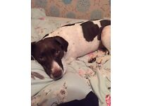 1 bed house wanted Ashford *allows dog*