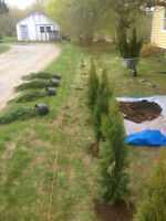 Mowing landscaping lot under brushing/chipping Windsor-greenwood