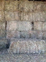 1st Cut Grass or Grass/alfalfa hay small squares for sale