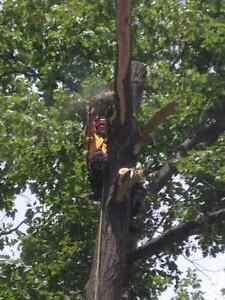 Lumbersmith Tree Removal Services Kitchener / Waterloo Kitchener Area image 4