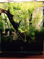 Cycled Fluval Chi For Sale