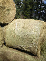 SOLD OUT 2nd cut alfalfa/timothy mix quality horse hay