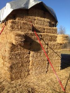 Small Square Wheat Straw Bales