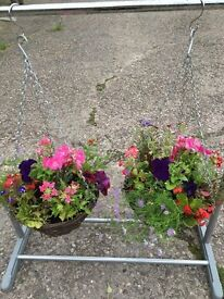 2 Summer Hanging Baskets - Free local delivery