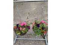 Hanging Baskets - Free delivery Stoke on Trent