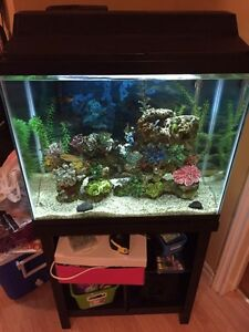 25 gallon everything included fish tank