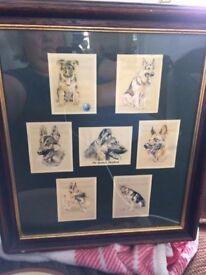 Picture depicting German Shepherds - Framed