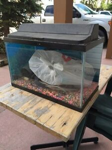 10 gallons fish tank