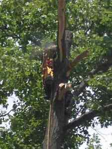 Lumbersmith Tree Removal Services Inc Cambridge Kitchener Area image 2