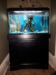Fish tank and base with accessories