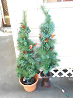 MOVING SALE Pair of Outdoor Tree's great for the patio