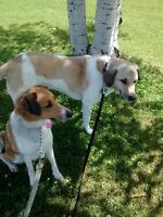 PET SITTING/DOG WALKING