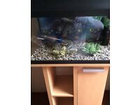 Juwel fish tank with stand and acc