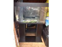 Juwel Rio 125 fish tank and stand