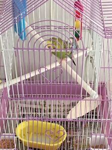 2 Bird&Cage