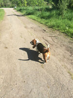 ***Professional Dog Walking and Boarding***