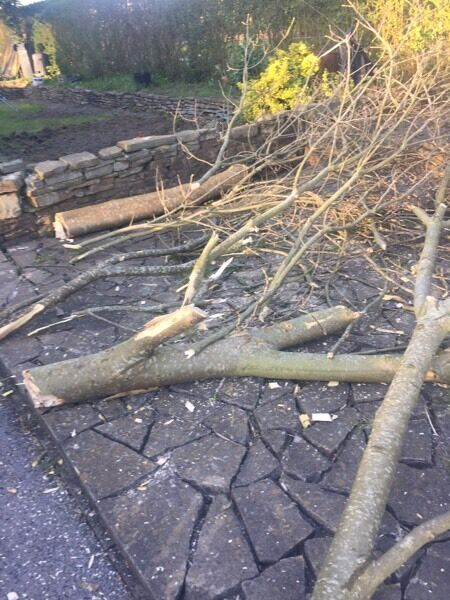 Fire wood for stovein Nelson, LancashireGumtree - Just recently felled half of a Ash tree. Free to anyone that wants to collect for their wood burning stoves