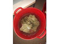 15kg live rock reef aquarium fish tank