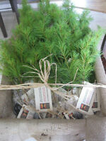 Tree Seedling Wedding Favors - Reserve Now - as low as.65!