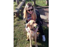 Dog Walker in Norwich city centre