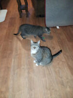 Adult cats for adoption by ca-r-ma Moncton