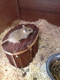 young playful, friendly Hamster and Gerbils
