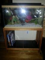 Aquarium 24 gallons - Prêt à l'emploi
