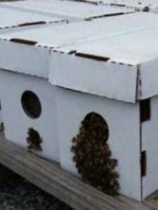 Bees beehives Nuc Beekeeping honeybee Pollination >>>